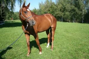 An- und Verkauf von Pferden